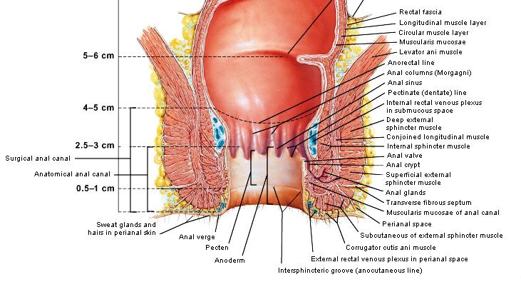 anatomie analkanal lesbisch flirten