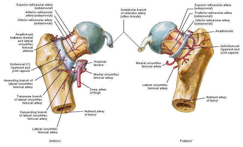 incisie