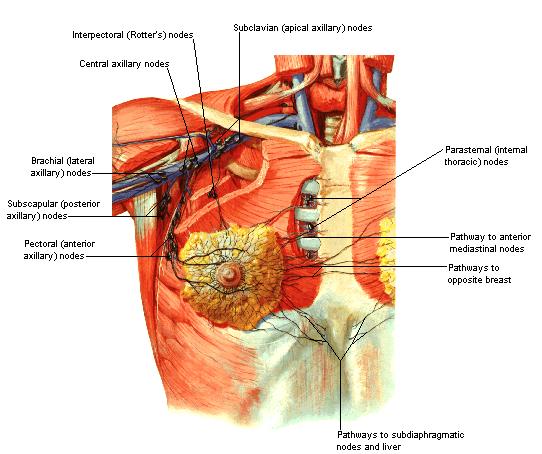 type borstkanker